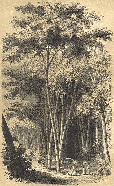 Associate Product LANDSCAPES. Paysage Hindou 1852 old antique vintage print picture