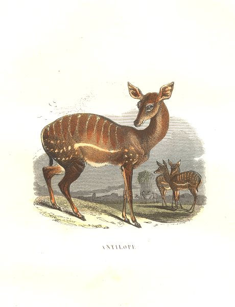 Associate Product ANIMALS. Antelope 1873 old antique vintage print picture