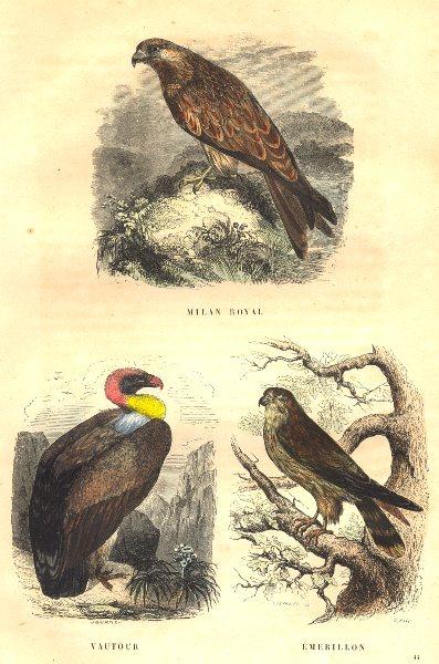 Associate Product BIRDS. Kite, Vulture, Swivel 1873 old antique vintage print picture