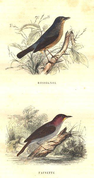 BIRDS. Order Passerines. Rossignol Warbler 1873 old antique print picture