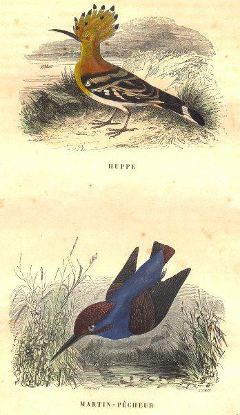 Associate Product BIRDS. Order Passerines. Huppe, Martin - Fisherman 1873 old antique print