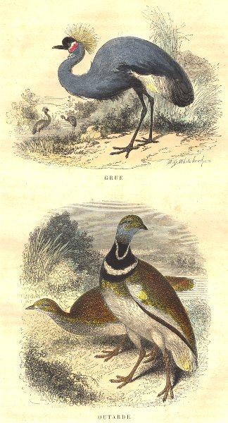 Associate Product BIRDS. Order of waders. Crane, Bustard 1873 old antique vintage print picture