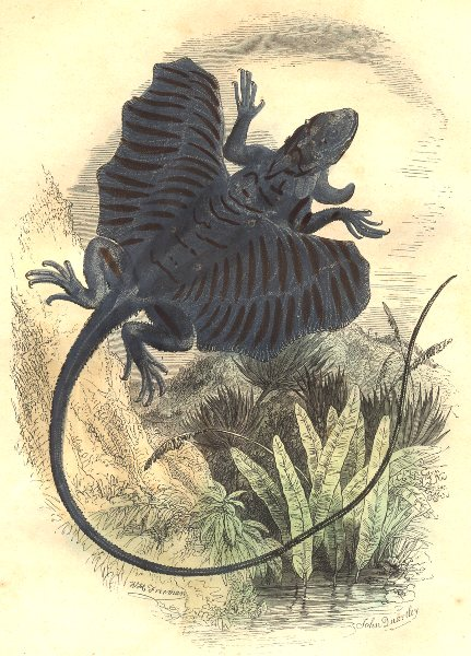 Associate Product REPTILES. Reptiles Dragon 1873 old antique vintage print picture