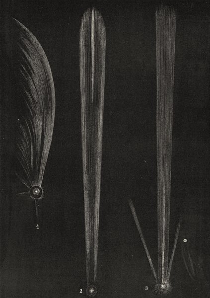 Associate Product COMETS. Comets of 1577, 1680 and 1769; Gemma, Sturm, Messier 1877 old print