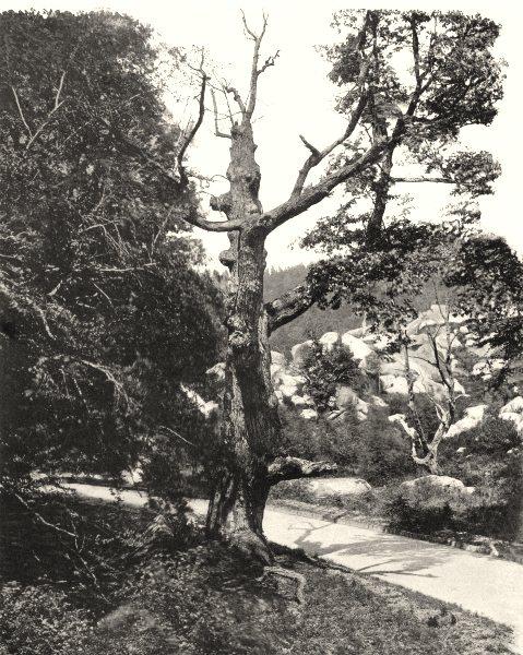 Associate Product SEINE-ET-MARNE. La descente de Sully 1902 old antique vintage print picture