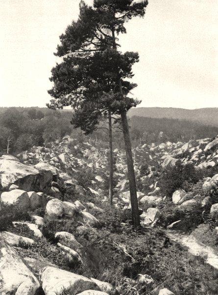 Associate Product SEINE-ET-MARNE. Le désert d'Apremont 1902 old antique vintage print picture