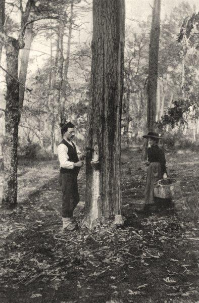 Associate Product LANDES. Landes- Récolte de la résine (procédé actuel) . SMALL. 1903 old print