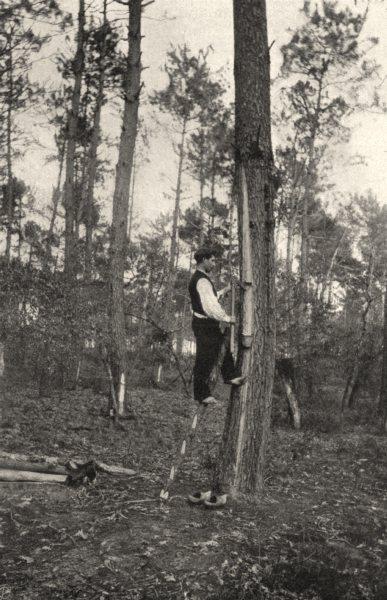 Associate Product LANDES. Landes- Récolte de la résine (procédé ancien) . SMALL. 1903 old print