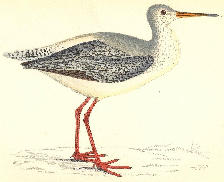 Associate Product BIRDS. Spotted Redshank (Morris) 1880 old antique vintage print picture