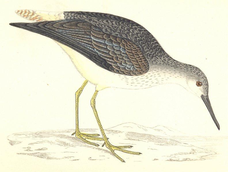 Associate Product BIRDS. Yellow- Shanks (Morris) 1880 old antique vintage print picture