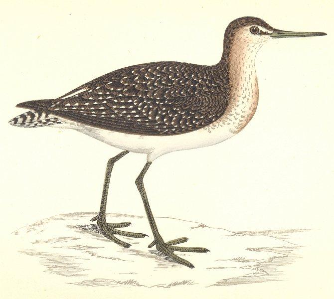Associate Product BIRDS. Wood Sandpiper (Morris) 1880 old antique vintage print picture