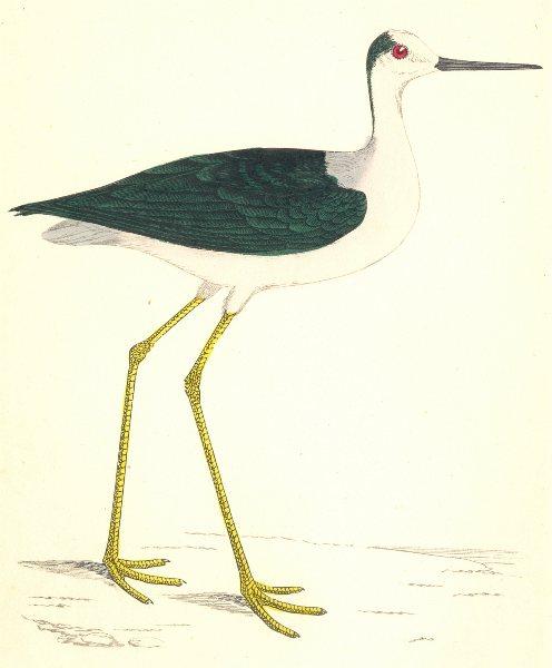 Associate Product BIRDS. Stilt (Morris) 1880 old antique vintage print picture