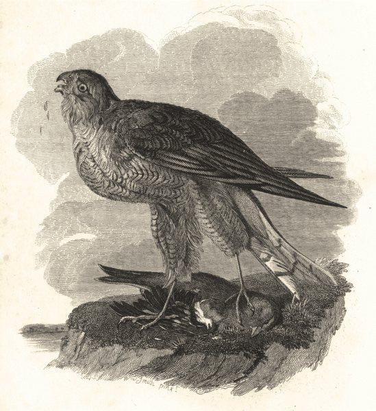 Associate Product BIRDS. Hawk 1833 old antique vintage print picture