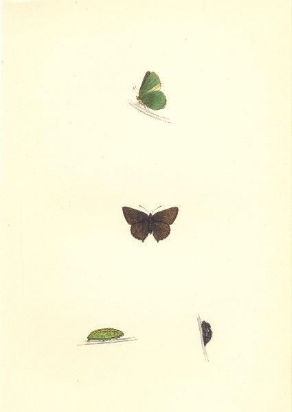 Associate Product BUTTERFLIES. Green Hairstreak (Morris) 1868 old antique vintage print picture