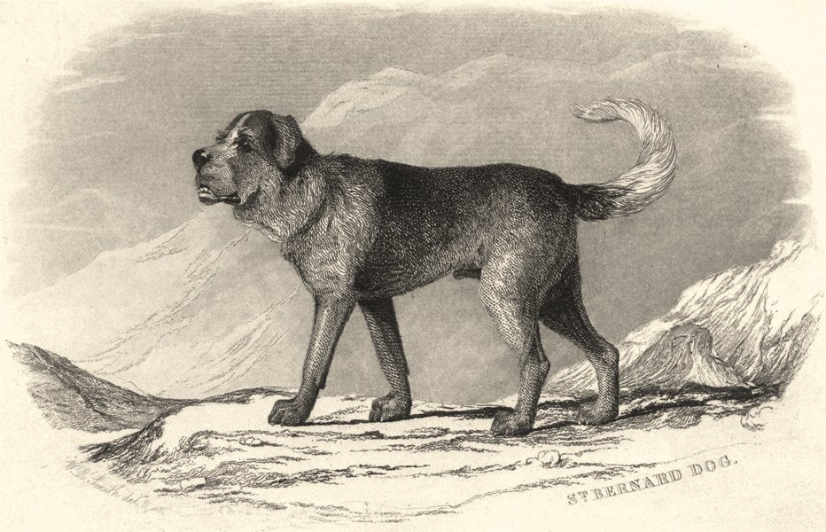 Associate Product DOGS. St. Bernard Dog. St. Bernard Dog (Edward Jesse) 1888 old antique print