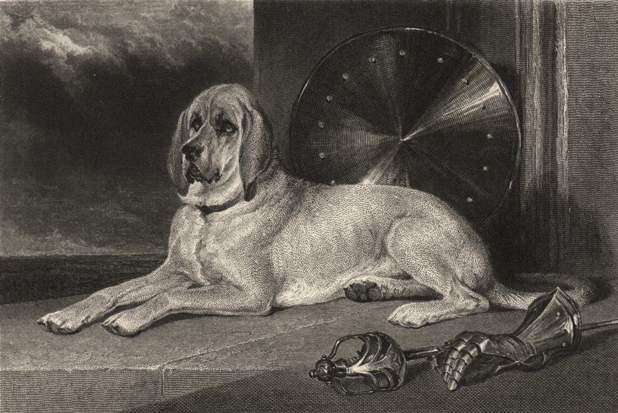 Associate Product DOGS. Marmion (a celebrated Bloodhound) (Edward Jesse) 1888 old antique print