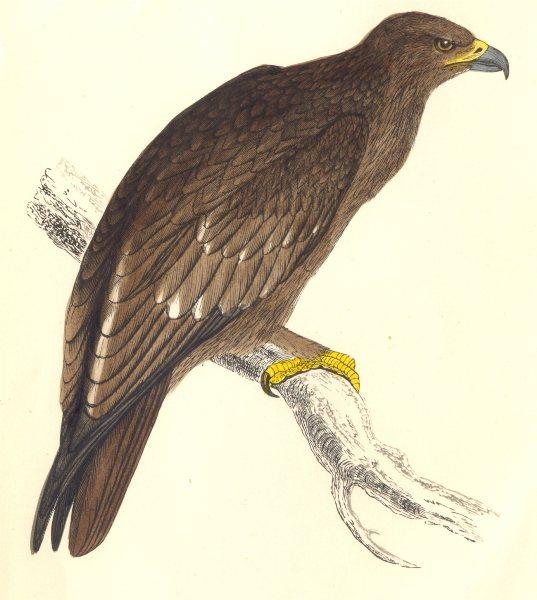 Associate Product BIRDS. Morris Spotted Eagle. (Morris) 1865 old antique vintage print picture