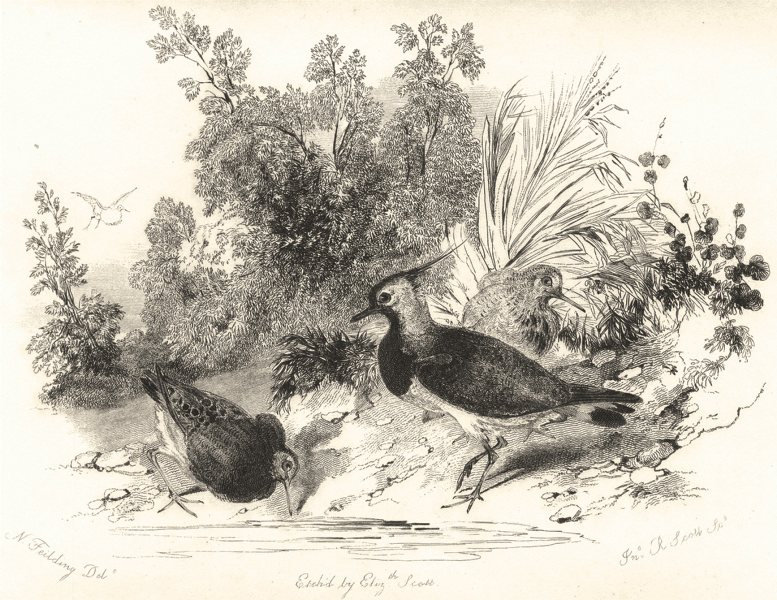 Associate Product BIRDS. Ruffs and Plover. Vignette style.  1835 old antique print picture