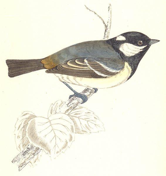 Associate Product BIRDS. Tit Cole Tit. Native of Europe. America. Asia (Morris) 1865 old print