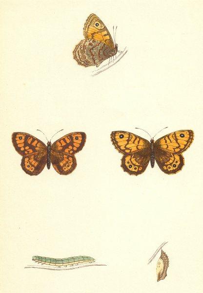 Associate Product BUTTERFLIES. Gate- Keeper (Morris) 1870 old antique vintage print picture