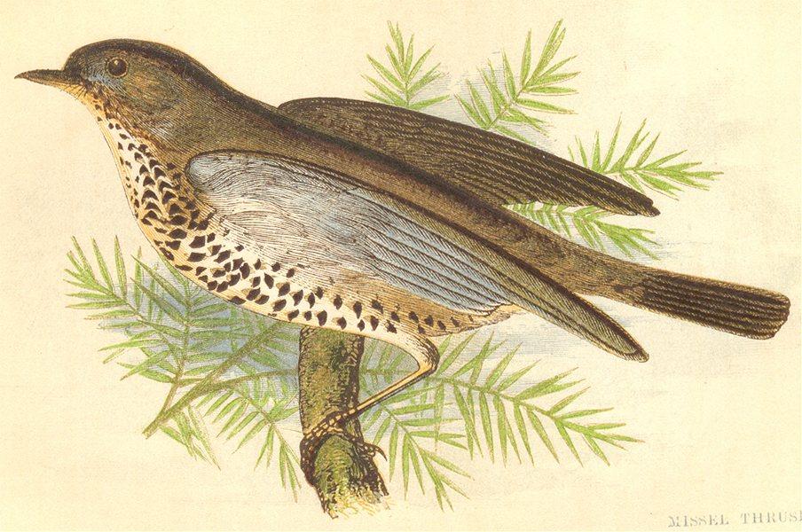 Associate Product BIRDS. Missel Thrush (Anne Pratt) 1852 old antique vintage print picture