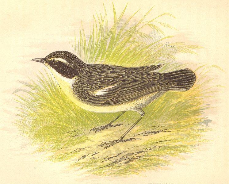 Associate Product BIRDS. Whinchat (Anne Pratt) 1852 old antique vintage print picture