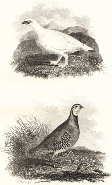 Associate Product BIRDS. Red Legged Partridge and Ptarmigan. Rural Sports.  1812 old print