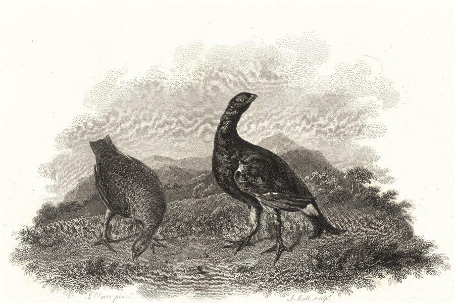Associate Product BIRDS. Black Grouse. Rural Sports 1812 old antique vintage print picture