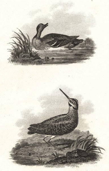 Associate Product BIRDS. Teal and Jack Snipe. Rural Sports. Teal; Jack Snipe 1812 old print