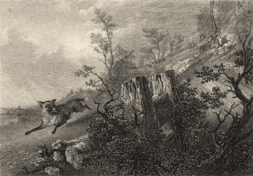 Associate Product DOGS. Fox Hunting. Dogs in pursuit. Good steel engraving (Edward Jesse) 1888
