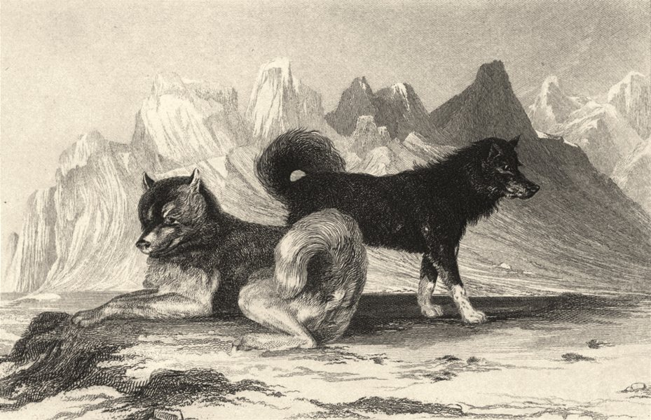 Associate Product DOGS. Esquimaux Dogs. Good steel engraving (Edward Jesse) 1888 old print