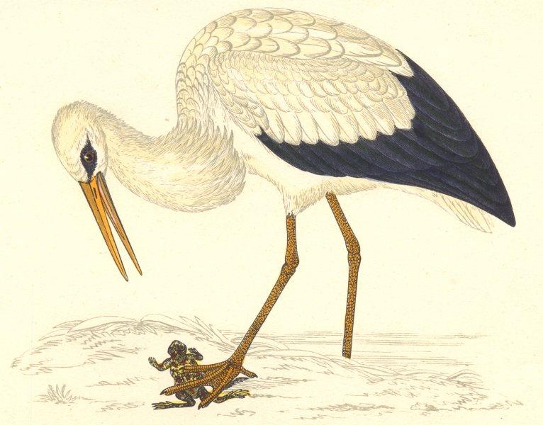 BIRDS. Stork White. Found in Europe. Asia. Japan (Morris) 1880 old print