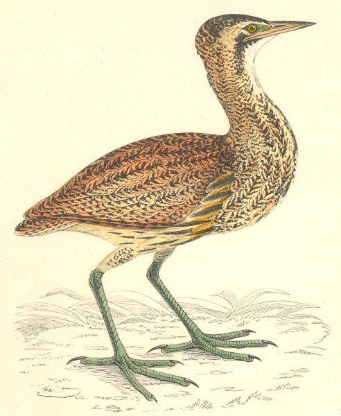 Associate Product BIRDS. Bittern. Found in Europe. Africa. Asia (Morris) 1880 old antique print
