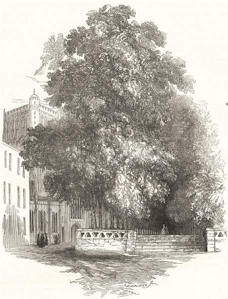 Associate Product BRISTOL. College Green 1850 old antique vintage print picture