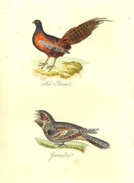 Associate Product BRITISH BIRDS. Mule Pheasant; Goatsucker. MUDIE. Hand coloured. 1835 old print