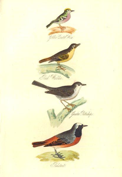 Associate Product BRITISH BIRDS.Golden Crested Wren;Reed Warbler;Pettichaps;Redstart.MUDIE. 1835