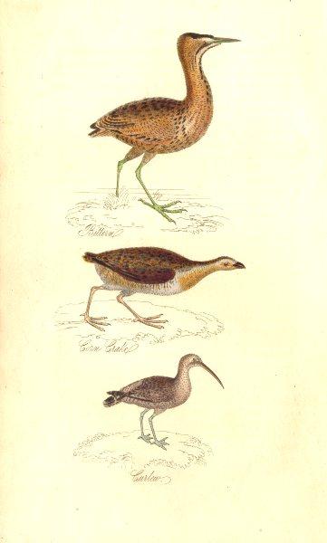BRITISH BIRDS. Bittern; Corn Crake; Curlew. MUDIE. Hand coloured. 1835 print