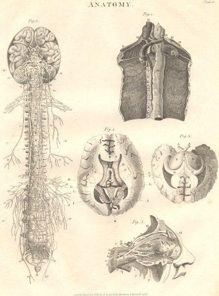 Associate Product BIOLOGY. Anatomy. Nervous system, organs. (Oxford Encyclopaedia) 1830 print
