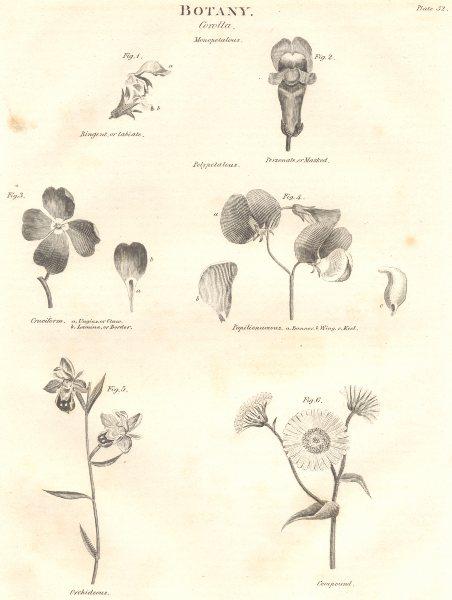 Associate Product BOTANY. Corolla. Ringent Personate Cruciform Papilionaceous Orchideous 1830