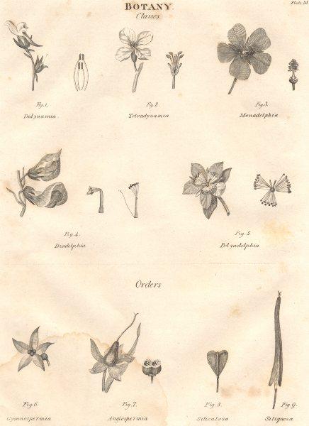BOTANY. Di-Tetra-Mona-Dia-Polyadelphia. Gymno-Angio-Spermia. Siliculosa 1830