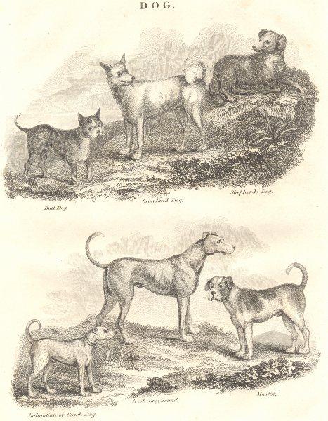 Associate Product DOGS. Bull Dog; Greenland; Sheep; Dalmation Coach; Irish Greyhound; Mastiff 1830