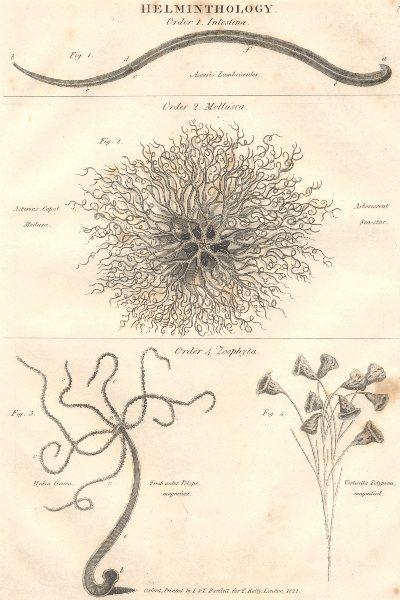 Associate Product WORMS.Helminthology.Intestina;Mollusca;Zoophyta.(Oxford Encyclopaedia) 1830