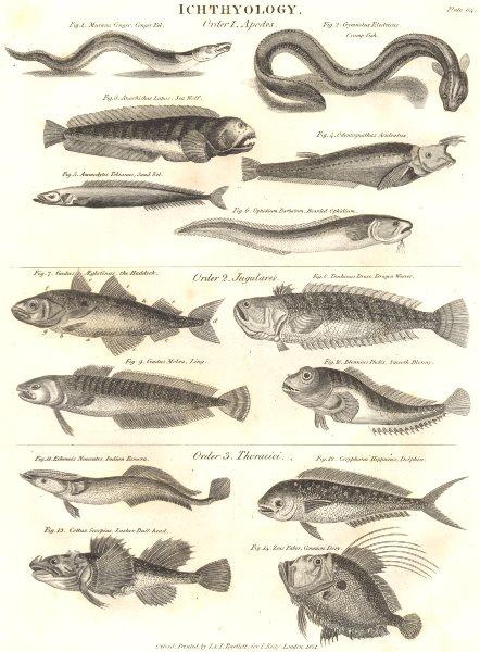 ICHTHYOLOGY.Sand,Conger Eel;Sea Wolf;Ophidium;Haddock;Ling;Blenny;Remora 1830