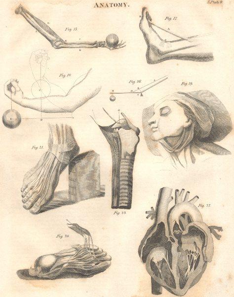 Associate Product BIOLOGY. Anatomy. Feet hert arms levers. (Oxford Encyclopaedia) 1830 old print