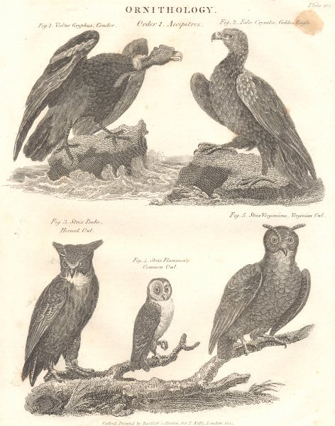Associate Product ORNITHOLOGY. Accipitres; Condor; Golden Eagle; Horned, Cmn Virginian Owl 1830