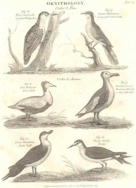 Associate Product BIRDS. Card. Woodpecker, Cuckoo; Eider Duck; Albatross; Arctic Gull; Noddy 1830