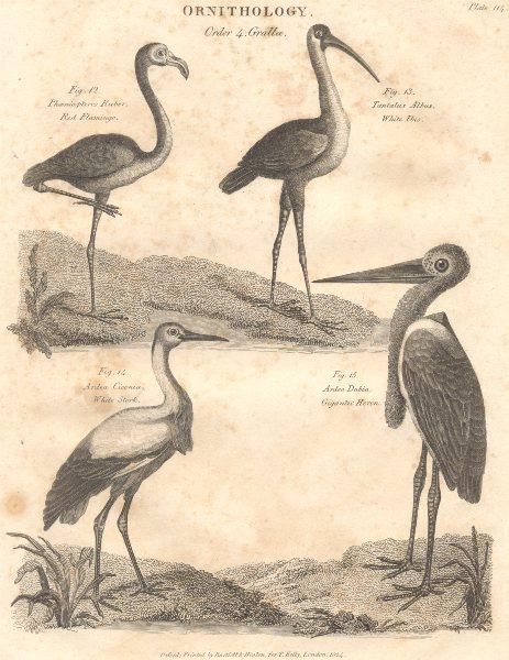 Associate Product ORNITHOLOGY. Grallae. Red Flamingo; White Ibis; White Stork; Gigantic Heron 1830