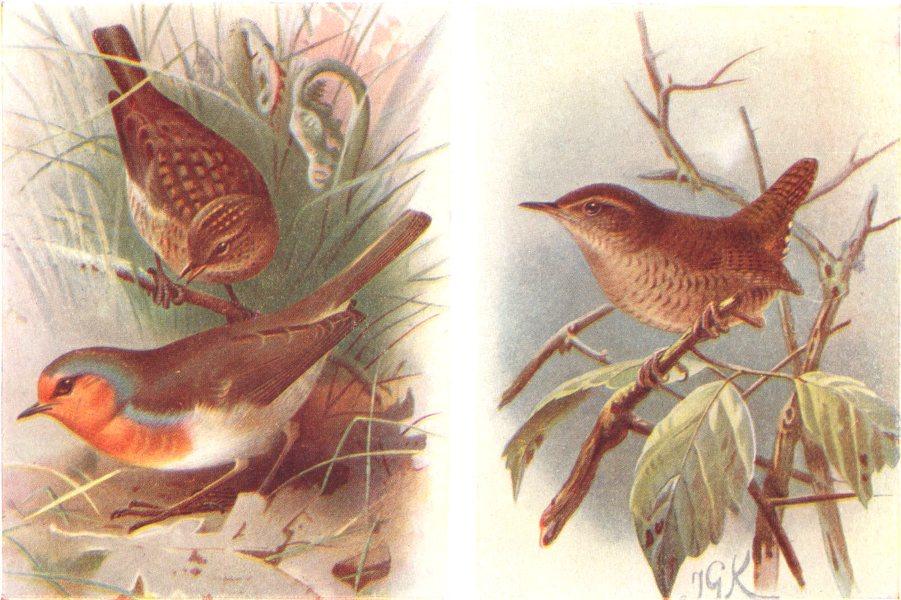 BRITISH BIRDS. Redbreast; Wren. THORBURN 1925 old vintage print picture