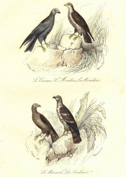 Associate Product BIRDS. Hen, Marsh Harrier; Honey Buzzard; Bondrée, Buzard. BUFFON 1841 print