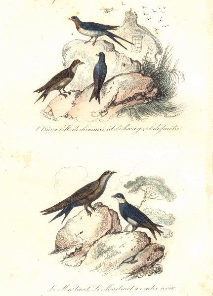 Associate Product BIRDS. Chimney, Bank, Window Swallow; Swift; Black Bellied Martin. BUFFON 1841
